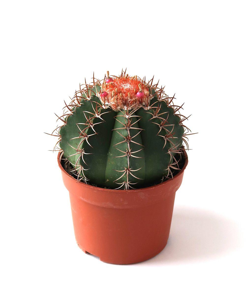 cat_cactus